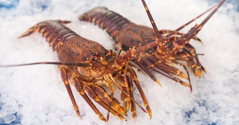West Coast Rock Lobster - Hendy Bros Seafood Traders & Marketing | Hendy Bros | International ...